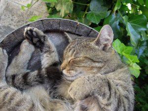 Cat sleeping in a barrel